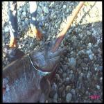 bagnara pescespada villari