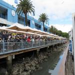 bagnara festa 2015 australia_61