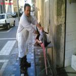 bagnara pescherie_01