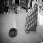 festa dei nonni 2016, laurendi_11