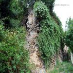 2014 bagnara saffioti_059