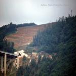 2014 bagnara saffioti_122