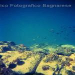 bagnara costiera 86 89 saffioti_174