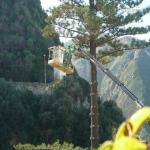 pino abbattuto 2012_05