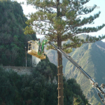 pino abbattuto 2012_06