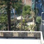 pino abbattuto 2012_07