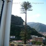 pino abbattuto 2012_10