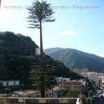pino abbattuto 2012_11