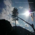 pino abbattuto 2012_13
