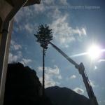 pino abbattuto 2012_14