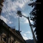pino abbattuto 2012_15