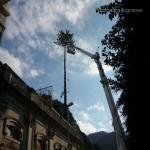 pino abbattuto 2012_16