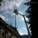 pino abbattuto 2012_17