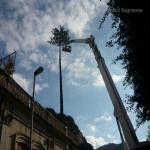 pino abbattuto 2012_18