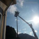 pino abbattuto 2012_19