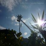 pino abbattuto 2012_20