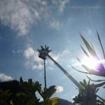 pino abbattuto 2012_21