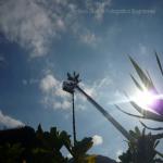 pino abbattuto 2012_22
