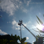 pino abbattuto 2012_23