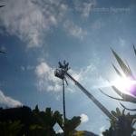 pino abbattuto 2012_24
