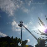 pino abbattuto 2012_25