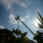 pino abbattuto 2012_27