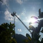 pino abbattuto 2012_28