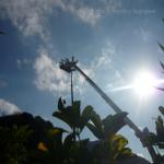 pino abbattuto 2012_29