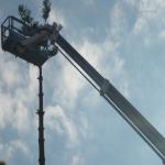pino abbattuto 2012_30