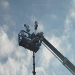 pino abbattuto 2012_32