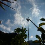 pino abbattuto 2012_33