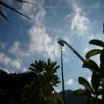pino abbattuto 2012_34