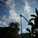 pino abbattuto 2012_35