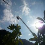 pino abbattuto 2012_36