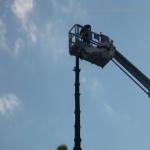 pino abbattuto 2012_40