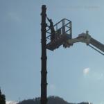 pino abbattuto 2012_41