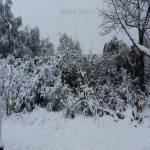 neve 9 febbraio 2015_71