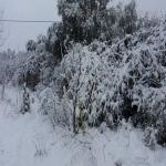 neve 9 febbraio 2015_72