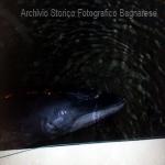 balena al porto 2016 b laurendi_4