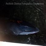 balena al porto 2016 b laurendi_6