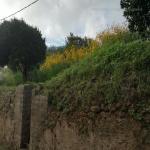 bagnara 2018 carmelo cacciola_416