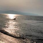 bagnara calabra 2019 rosella meliambro_81