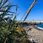 bagnara calabra 2019 rosella meliambro_93