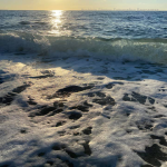 bagnara rosella meliambro luglio 2020_23