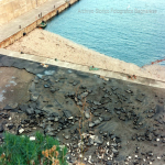 bagnara 1991_57