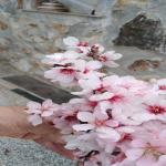 bagnara rocco fedele marzo 2021_02