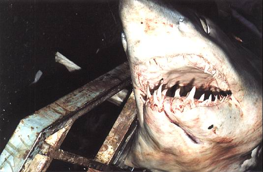bagnara squalo giornali