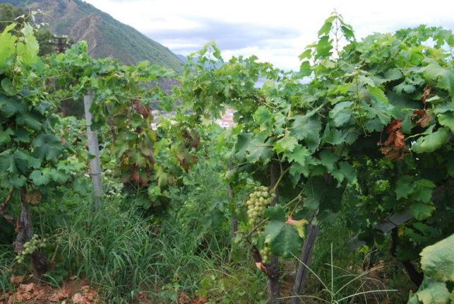 scrap_2016_Il_valore_della_terra_coltivata_4