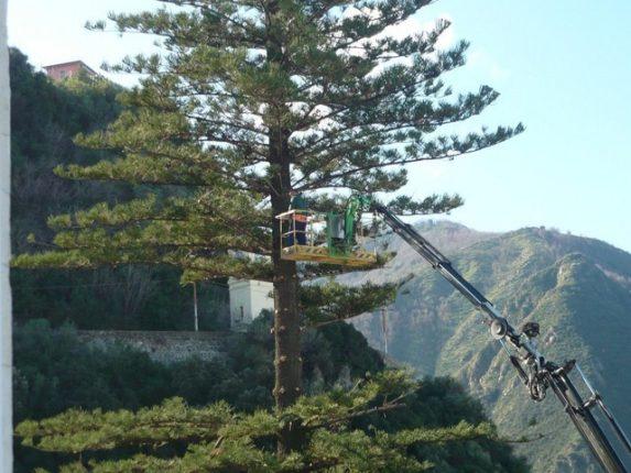18 febbraio 2012  Abbattimento del pino  che da settanta anni era locato nella villa Albanese in via Umberto I  maestro Mimmo Fadani