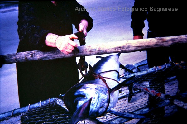 contrattazione del pesce